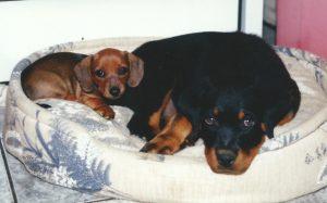 Schnudie and Wolfie