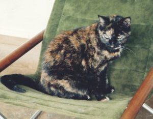 Katy Cat