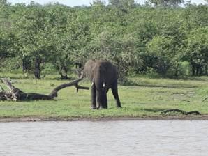 On the far side, a lone bull elephant.