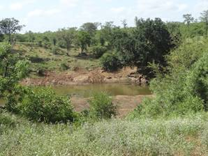 A hippo pool.