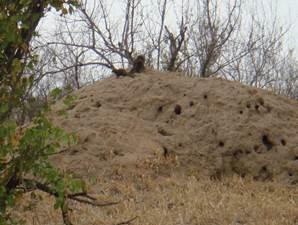 Termite Heap